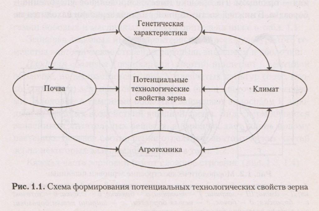 Схема формирования потенциальных технологических свойств зерна