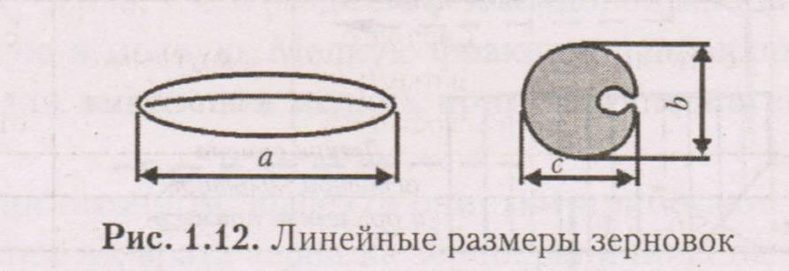 Линейные размеры зерновок