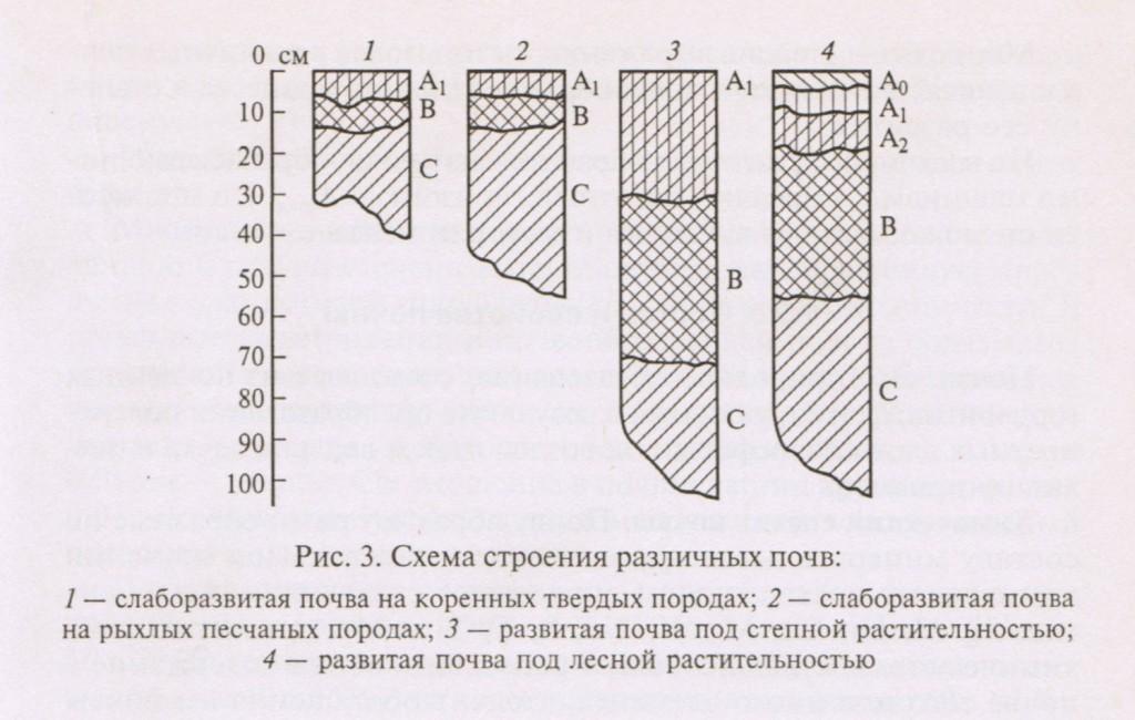 Схема строения различных почв