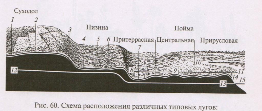Схама расположения различных типов лугов