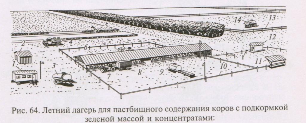Летний лагерь для пастбищного содержания коров с подкормкой зеленной массой и концентратами.