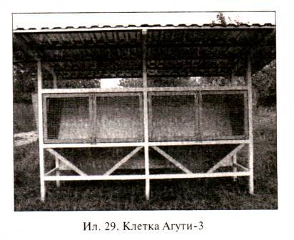 Клетка Агути-3