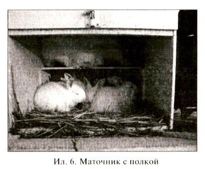 Маточник для кроликов с полкой